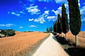 Country road. Tuscany. Italy