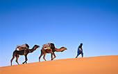 Journey with camels. Erg chebbi dessert. Merzouga. Tafilalt. Morocco