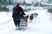 Sledge dogging. Quebec province. Canada