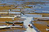 Indonesia. Bali. Nusa Lembongan island. Algae cultivation.