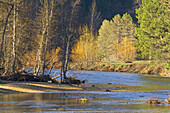 Morning sunlight on trees along the Merced River in spring, Yosemite Valley, Yosemite National Park, California