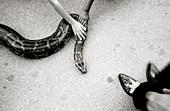 Aussen, Außen, Bedrohlich, Bedrohung, Berühren, Boden, Böden, Detail, Details, Ein Tier, Eins, Erwachsene, Erwachsener, Fakir, Fuß, Füsse, Hand, Hände, Horizontal, Mensch, Menschen, Namenlos, Reptil, Reptilien, Schlange, Schlangen, Schwarzweiss, Seltsam,