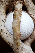 Ball, Balls, Branch, Branches, Caught, Close up, Close-up, Closeup, Color, Colour, Concept, Concepts, Golf, Golf ball, Golf balls, Indoor, Indoors, Inside, Interior, Nature, Object, Objects, Odd, Plant, Plants, Still life, Strange, Thing, Things, Trapped