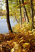 Lakeside in fall. New England, USA