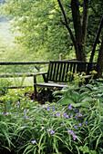 Spiderwort & Hellebore foliage in shade bed frames wood bench under Castanea mollis (Castanea mollis; Tradescantia sp.; Helleborus orientalis cv.). Sunshine Farm, Renick, WV.
