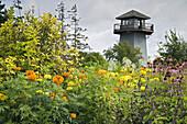 Marigolds & Purple Coneflowers w/ observation tower bkgnd (Tagetes patula; Echinacea purpurea). Tennant L Fragrance Garden, Ferndale, WA.