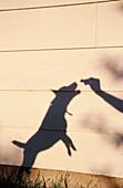 Aktivität, Ausgelassen, Ausgelassenheit, Außen, Bewegung, Ein Tier, Eine Person, Eins, Farbe, Gehorsam, Gleichgewicht, Haustier, Haustiere, Hund, Hunde, Hunger, Hungrig, Mauer, Mauern, Mensch, Menschen, Namenlos, Schatten, Spielen, Spielend, Spielende, S
