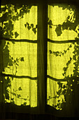 Back-light, Backlight, Botany, Color, Colour, Curtain, Curtains, Green, Green tone, Indoor, Indoors, Interior, Leaf, Leaves, Mysterious, Mystery, Pattern, Patterns, Plant, Plants, Silhouette, Silhouettes, Texture, Textures, Toned, Window, Windows, G40-620