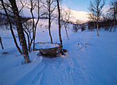 Abandoned, Abandonment, Aged, Birch, Birches, Boat, Boats, Cold, Coldness, Color, Colour, Covered, Daytime, Deserted, Europe, Exterior, Horizontal, Lapland, Mood, Nature, Old, Outdoor, Outdoors, Outside, Remote, Season, Seasons, Snow, Sweden, Tree, Trees