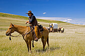 Cowboys and chuck wagon. Porcupine Hills, Southern Alberta, Canada