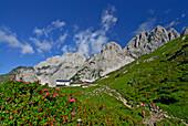 sea of alpine roses with lodge Gruttenhütte and group of hikers, Treffauer, Kaiserkopf and Ellmauer Halt in background, Kaiser range, Tyrol, Austria