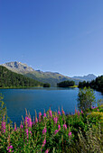 Lake Champfer, Upper Engadin, Grisons, Switzerland