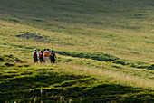 Group of hikers crossing alpine pasture, Val Trupchun, Swiss National Park, Engadin, Grisons, Switzerland