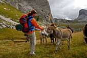 young woman with herd of donkeys, Forcella Giau, Alta Via delle Dolomiti No. 1, Dolomites, Cortina, Venezia, Italy