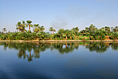 cruise on the Nile, palm trees at bank, Nile between Luxor and Dendera, Egypt, Africa