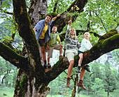 Family in a tree, Eng, Kleiner Ahornboden, Tyrol, Austria