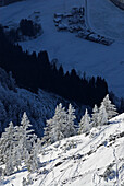 Snow-covered winter forest with view down to village in the deep blue shadow, Peterskoepfl, Zahmer Kaiser, Kaiser range, Kufstein, Tyrol, Austria