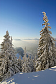 Snow-covered winter forest near hut Vorderkaiserfeldenhuette and fog bank in the valley of Inn, Zahmer Kaiser, Kaiser range, Kufstein, Tyrol, Austria