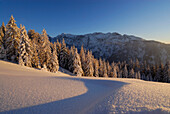 Snow-covered winter forest with hoar frost, rime ice on snow, Wilder Kaiser range in background, Zahmer Kaiser, Kaiser range, Kufstein, Tyrol, Austria