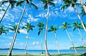 Beach. Samana Peninsula. Dominican Republic