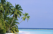 Maldives Islands. Indian Ocean