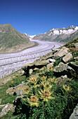 Aletsch Glacier. Alps. Switzerland