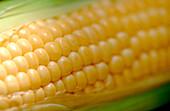 Background, Backgrounds, Cereal, Cereals, Close up, Close-up, Closeup, Cob, Cobs, Color, Colour, Corn, Corncob, Corncobs, Detail, Details, Food, Grain, Grains, Horizontal, Indoor, Indoors, Inside, Interior, Maize, Natural, Natural background, Natural bac