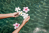 Anonymous, Asia, Color, Colour, Contemporary, Daytime, Delicate, Detail, Details, Exterior, Female, Feminine, Finger, Fingers, Float, Floating, Flower, Flowers, Fragile, Fragility, Fresh, Freshness, Hand, Hands, Hibiscus, Human, Island, Islands, Koh Samu