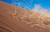 Amerika, Außen, Detail, Details, Dürre, Ende, Farbe, Getrocknet, Gras, Hitze, Horizontal, Konzept, Konzepte, Landschaft, Landschaften, Mountain Region USA, Nahaufnahme, Nahaufnahmen, Natur, Nordamerika, Ökosystem, Ökosysteme, Pflanze, Pflanzen, Sand, Tag