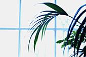 Back-light, Backlight, Color, Colour, Concept, Concepts, Daytime, Decoration, Delicate, Detail, Details, Horizontal, Indoor, Indoors, Inside, Interior, Leaf, Leaves, Light, Lightness, Plant, Plants, Sunlight, Window, Windows, G85-312874, agefotostock
