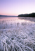 Frozen grass at waters edge. Lake Västersjön, Hallandsåsen Ridge, Sweden, Scandinavia, Europe.