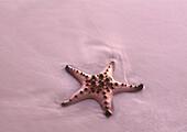 Starfish at waters edge. Kho Lanta, Thailand, Asia.