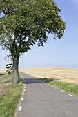 Country road between wheat fields in summer. Skåne. Sweden