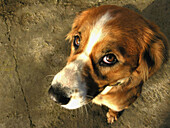 Animal, Animals, Close up, Close-up, Closeup, Color, Colour, Concept, Concepts, Daytime, Detail, Details, Dog, Dogs, Expressive, Expressiveness, Exterior, Facial expression, Facial expressions, Facing camera, Innocence, Innocent, Looking at camera, Mamma