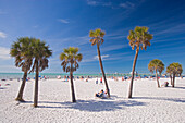 Palm trees at Clearwater Beach under blue sky, Tampa Bay, Florida, USA