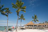 Palm trees in front of Holiday Isle Resort under blue sky, Islamorada, Florida Keys, Florida, USA