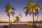 Palm trees at the beach of the Holiday Isle Resort in the evening, Islamorada, Florida Keys, Florida, USA