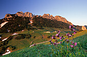 Alpine hut Steinlingalm with Kampenwand in morning light, red campion in foreground, Chiemgau Alps, Chiemgau, Bavaria, Germany