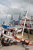 Aasgeier lungern vor Fischerboote im Hafen nahe Mercado Ver O Peso Markt, Belem, Para, Brasilien, Südamerika