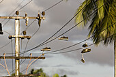 Shoes hanging over electric wire in the evening light, Lae, Papua New Guinea, Oceania