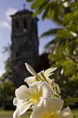 Flower in front of steeple, German Church of Kolonia, Pohnpei, Micronesia, Oceania