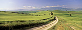 Farms and path with cypress trees, Val d Orcia, Pienza,Tuscany, Italy