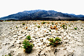 Arid, Aridity, Barren, Color, Colour, Daytime, Deserted, Desolate, Desolation, Dried, Dry, Ecosystem, Ecosystems, Exterior, Horizontal, Landscape, Landscapes, Mountain, Mountains, Nature, Nobody, Outdoor, Outdoors, Outside, Remote, Scenic, Scenics, J87-3