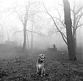 Abandoned, Abandonment, Alone, Animal, Animals, Athletic, Athletics, Authority, B&W, Big, Black & white, Black-and-White, Canine, Confidence, Confident, Contemporary, Control, Controlling, Country, Countryside, Dawn, Dawning, Day, Daybreak, Daytime, Defe