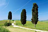 Way with cypress trees near Pienza. Val d Orcia. Siena province. Tuscany. Italy.