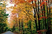 Amerika, Außen, Baum, Bäume, Dicht, Farbe, Gerade, Geraden, Herbst, Horizontal, Jahreszeit, Jahreszeiten, Landstraße, Landstraßen, Natur, neue England, Niemand, Nordamerika, Pflanze, Pflanzen, Ruhe, Straße, Straßen, Tageszeit, USA, Vegetation, Vereinigte