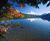 Western redcedar (Thuja plicata) and vine maple (Acer circinatum) Lost Lake. Mt. Hood, Mt. Hood National Forest. Hood River County. Oregon. USA.