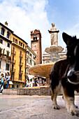 Hund am Marktplatz, Piazza della Erbe, Verona, Venetien, Italien