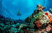 Snorkeling over Coral Reef, Maldives, Indian Ocean, Ari Atoll