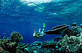 Reef with Table Corals and Snorkeler, Maldives, Indian Ocean, Meemu Atoll